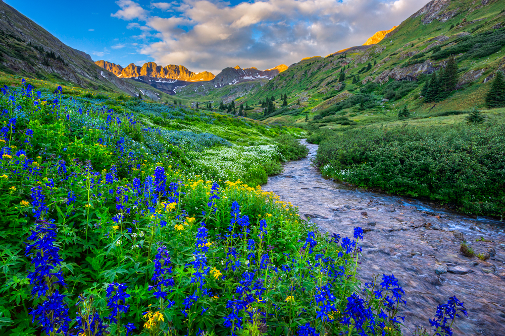 Wildflower Pic