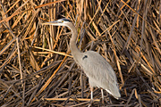Bosque del Apache National Wildlife Refuge Image