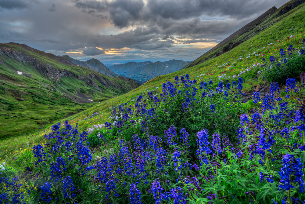 Wildflower Picture