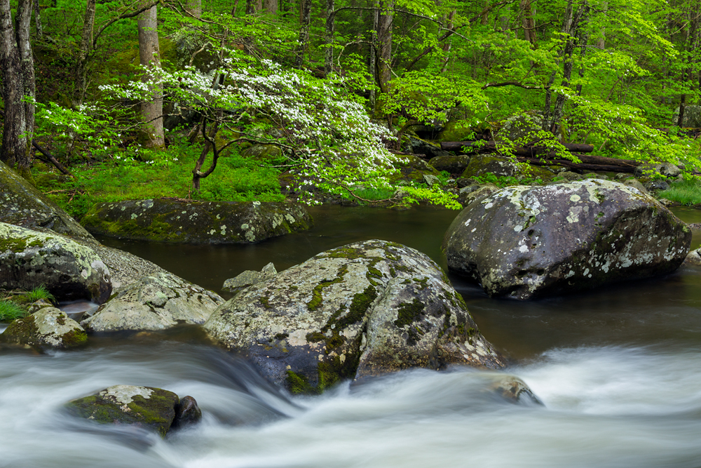 Great Smoky Mountains National Park Image