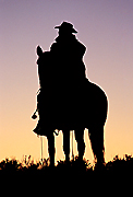 Pictures of Colorado Cowboys and Horses
