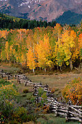 Colorado autumn photograph