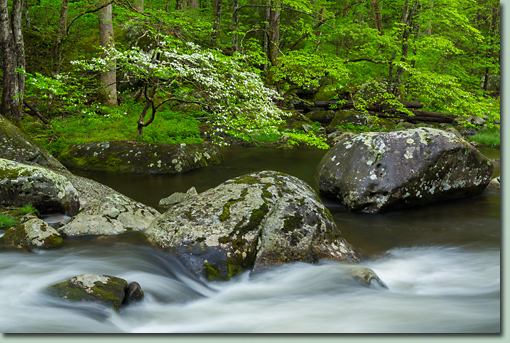 Spring in the Great Smoky Mountains