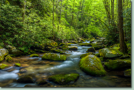 Smoky Mountain Spring Photo Workshop